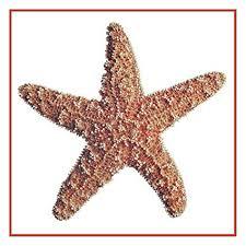 Starfish Chart Amazon Com Orenco Originals Nautical Seashore Red Starfish