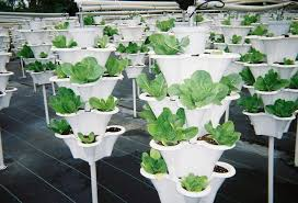 innovative ideas container vegetable gardening vegetables for great
