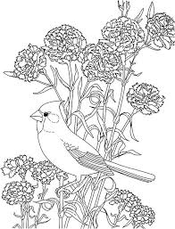 Carnation Coloring Page Carnation Coloring Carnation Flower And