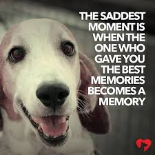sad dog quote picture 2017