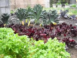yard for planting a vegetable garden