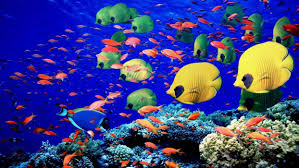 colorful coral reef wallpaper. Animals Fishes Underwater Swim Coral Reef Colors Bright Sea Life Wallpaper With Colorful