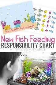 New Fish Responsibility Chart Caring For Your Betta Fish