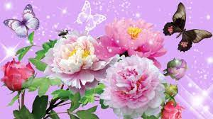 Flower Hd Images/Wallpapers/3D/Pic ...