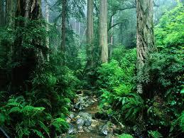 Природа растения и животные Южной Америки Лес настолько густой что передвигаться по нему чрезвычайно трудно затрудняют движение и лианы Характерным растением для тропического леса является сейба