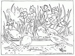 Adult Bird Coloring Pages With Coloring Pages Appealing Bird