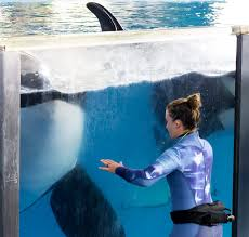 don t miss the seaworld shamu show at seaworld texas