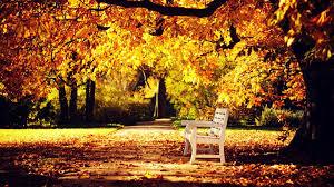 fall nature backgrounds. Autumn Nature Wallpaper - Wallpaper. Fall Backgrounds