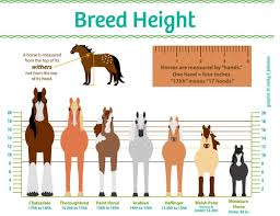 Horse Height Chart Horse Illustrated Horse Breeds Horse