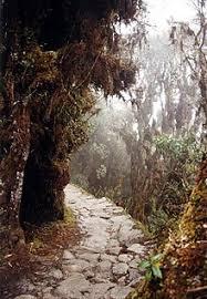 Дорога Википедия Дорога инков в Мачу Пикчу