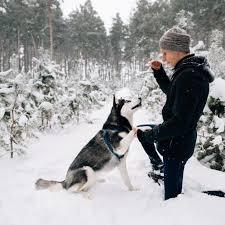 <b>Dog</b> Training Tools | Anti-Barking Devices, <b>Pet</b> Playpens-Super ...