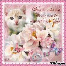 Schönes Wochenende Katze Good Morning Wochenende Lustig Schönes