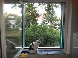 Der Katzenbalkon Bauanleitung Zum Selberbauen 1 2 Docom Deine