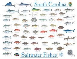Saltwater Fish Chart Fishing