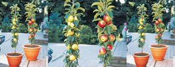 Different Fruit Trees