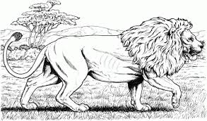 Small Picture Coloring Pages Jungle Animals Coloring Pages All The Wild Animals