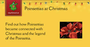 Poinsettias -- Christmas Customs and Traditions -- whychristmas?com