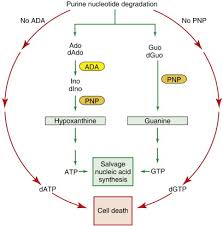 nucleic acid degradation an overview