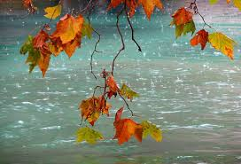 Risultati immagini per autunno pioggia