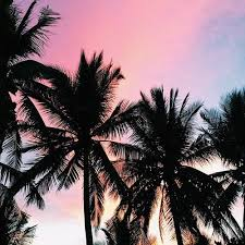 Beautiful Sunset Over Palm Trees Pictures Photos and Images for