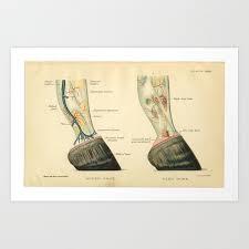 Vintage Horse Hoof Anatomy Print Art Print By Aburnski