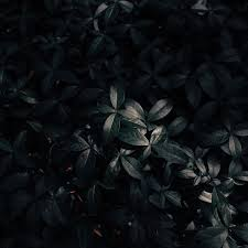 Wallpaper Plant, Leaves, Dark - Dark ...