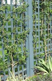 Wall Art With Cable Trellis And Climbing Vines In Custom Artwork Climbing Plant Trellis