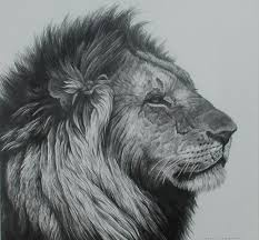 realistic lion face drawing. Plain Drawing Realistic Elephant Face Drawing  Google Search Throughout Realistic Lion Face Drawing C