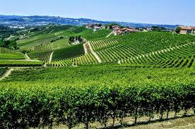 Barbaresco Wine First Among Equals Page 2 Of 3 Decanter