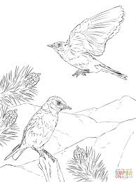 Blue Bird Coloring Pages Nauhoituscom All About 10k Top