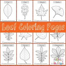 Collect some real leaves to glue onto your leaf pictures. Leaf Coloring Pages Itsybitsyfun Com