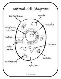 Animal Cell Diagram Wiring Diagrams