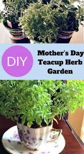 teacup herb garden charming diy