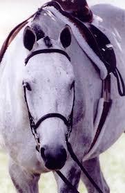 Veterinary Researcher Examines Malignant Melanoma In Horses