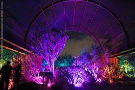 Desert Botanical Garden Light Display Succulents And More Electric Desert After Dark At The