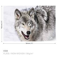Fototapeta Zvíře Vlk