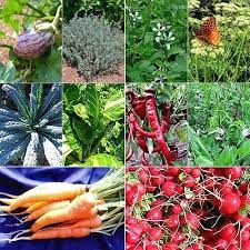 Vegetable Garden Seed Bright Side Org