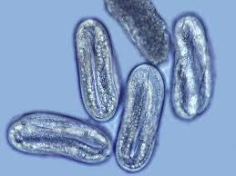 University Of Maryland Plant Parasitic Nematology Laboratory