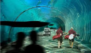 real underwater train. Players Will Access The Floating Course Via A Series Of Underwater Tunnels So Wide They Can Real Train F