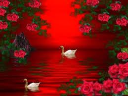 cute red roses