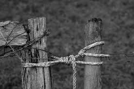 white wire garden fence. Free Images : Tree, Nature, Branch, Rope, Wing, Fence, Barbed Wire, Black And White, Wood, Farm, Leaf, Old, Bar, Rural, Pile, Pasture, Soil, Agriculture, White Wire Garden Fence