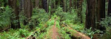 Grizzly creek redwoods state park in carlotta is rated 0.0 of 10 at campground reviews. Grizzly Creek Redwoods State Park California