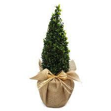 Christmas Plants Gifts  Christmas Gift IdeasChristmas Gift Plants