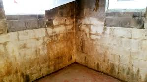 spectacular design how to remove mold from basement walls delightful ideas how remove mold