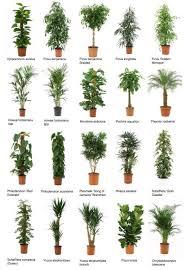 best indoor office plants. best indoor office plants 100 ideas on wwwvouum o