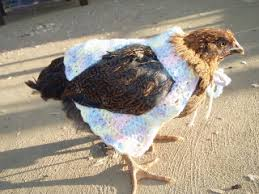 Chicken Sweater Pattern Inspiration Nancy Bush Shawl Pattern What Did She Do Today
