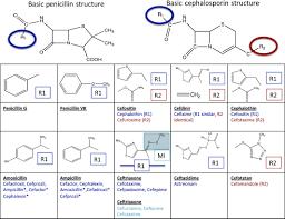 The Challenge Of De Labeling Penicillin Allergy Stone