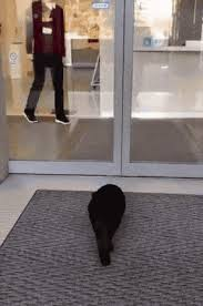 in march of last year the same black neighbourhood cat returned