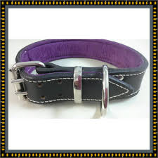large black leather dog collar with soft purple leather inner lining land shark k 9 australia