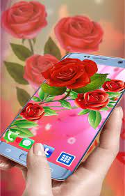 Rose wallpapers hd - Beautiful Red ...
